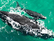 Dolphin and whale watching in Paternoster