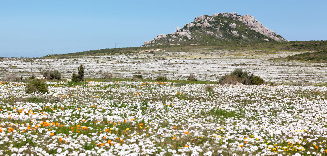 Activities and Accommodation in the West Coast, Western Cape, South Africa, www.west-coast-info.co.za
