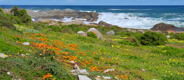 The largest natural bay in South Africa, Saldahna, is situated in the West Coast region of the Western Cape.